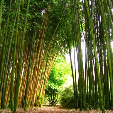 Les Bambous de Planbuisson in Le Buisson-de-Cadouin