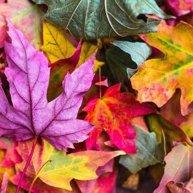 Wat te doen in de (moes)tuin in november