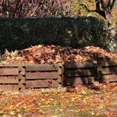 Wat te doen in de (moes)tuin in januari (deel 3)