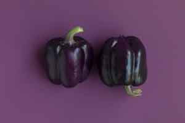 aubergines-300x200x72