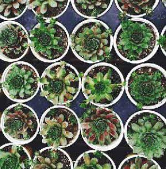cactussen-300x362x72