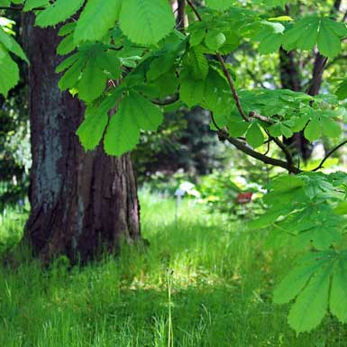 Wanneer laat het lokale stedenbouwkundige plan bomen staan die te dicht bij de buurman staan