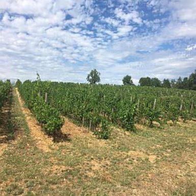 Op stap: La Cantine, Moncalou en Vin de Domme