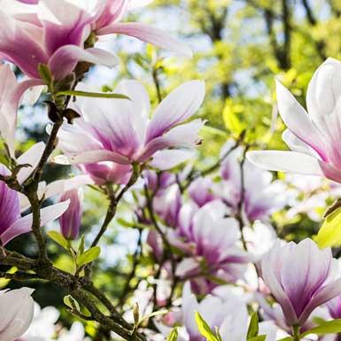 Wat te doen in de (moes)tuin in maart