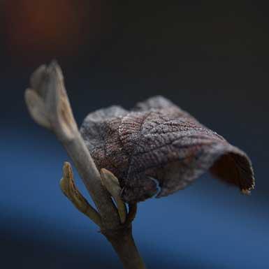 IJsheiligen en vorstgevoelige planten