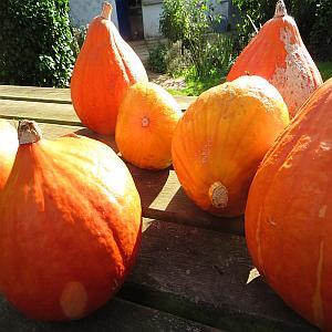 Wat te doen in de (moes)tuin in oktober?